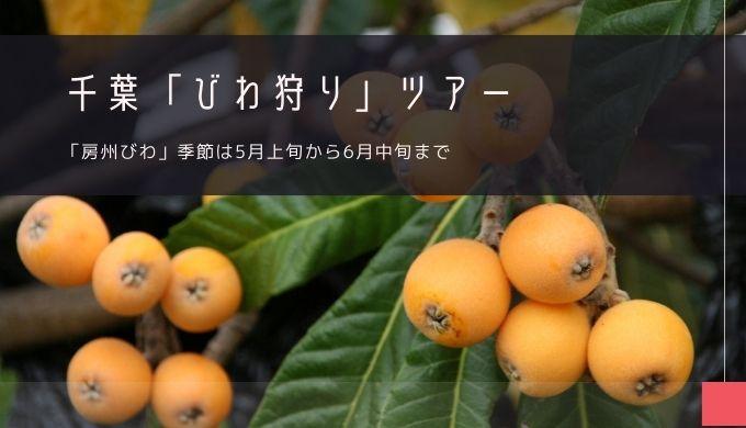 千葉「びわ狩り」ツアー特集!