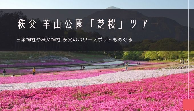 秩父・羊山公園の芝桜 ツアー特集!
