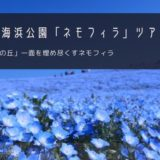 ひたち海浜公園「ネモフィラ」バスツアー特集!